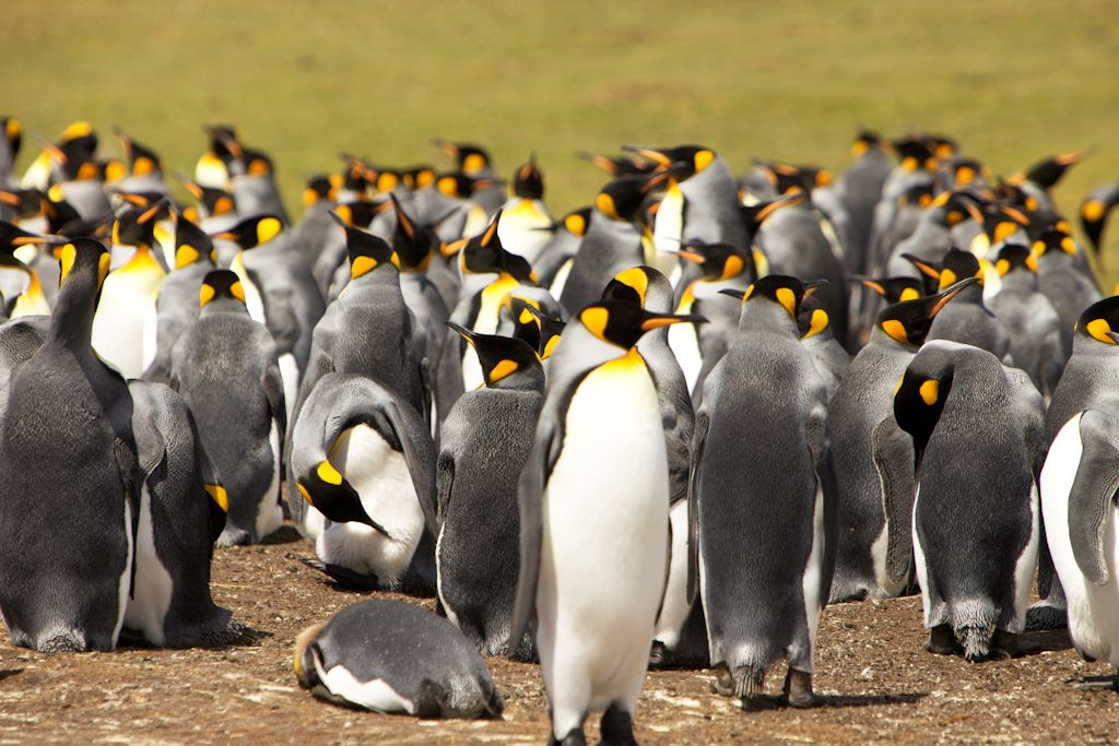 Video Highlights from the Falkland Islands